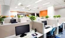 Las plantas purifican los ambientes, por lo que son ideales para oficinas cerradas o donde hay fumadores. Foto:lasaludentumano.com